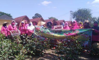 SIBA Rossela Lawang Kidul Lakukan Panen Perdana Bunga Rosella