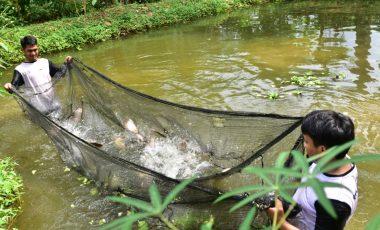 Manfaatkan Lahan Kosong, Putra Zaman Berhasil Budidayakan Ikan Air Tawar